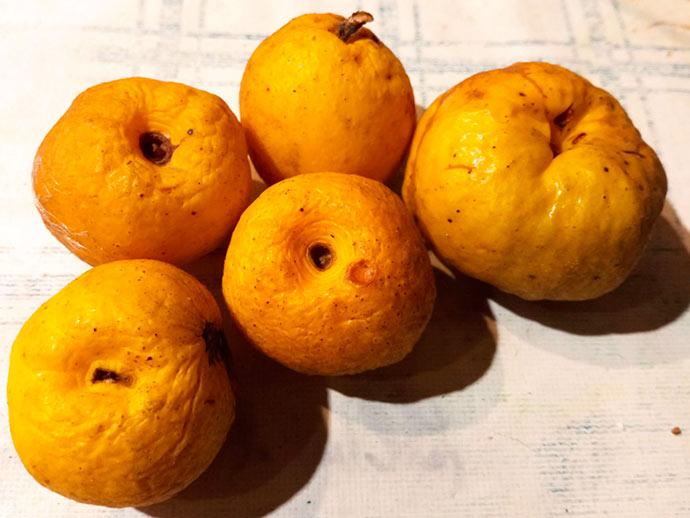 Плоды айвы низкой - на семена © blumgarden.ru