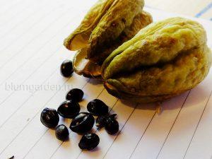 Семена лилейника - посев в марте