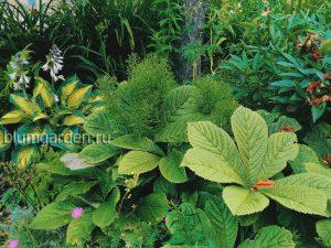 Декоративно-лиственные бордюрные многолетники