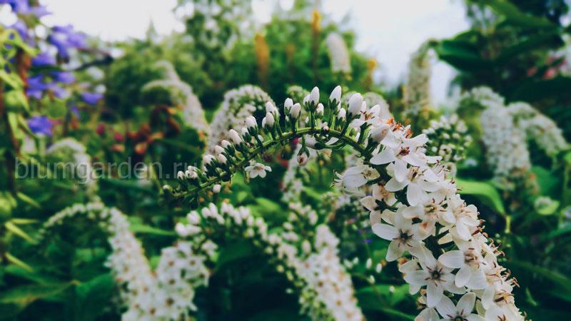 Дизайн сада - растения для сада © blumgarden.ru