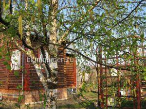 Календарь садовых работ © blumgarden.ru в мае