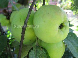 Обрезка плодовых деревьев © blumgarden.ru
