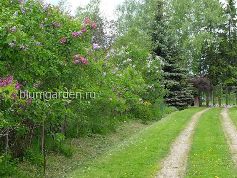 Питомник растений в Московской области © Blumgarden.ru