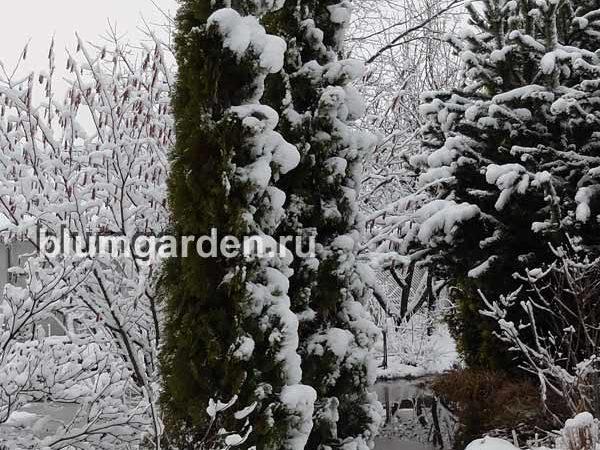 Апрельский снегопад в Подмосковье © Blumgarden.ru