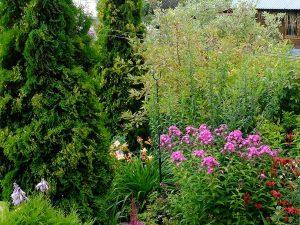 Туя Смарагд в ландшафтном саду © Blumgarden.ru