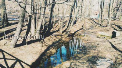 Весна в парке © blumgarden.ru