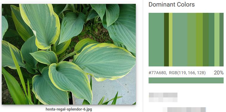 Хоста Regal Splendor - доминантные цвета для садовой композиции
