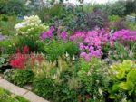 О нас - мой сад. Флоксы метельчатые, астильбы, хоста, гортензия © Blumgarden.ru