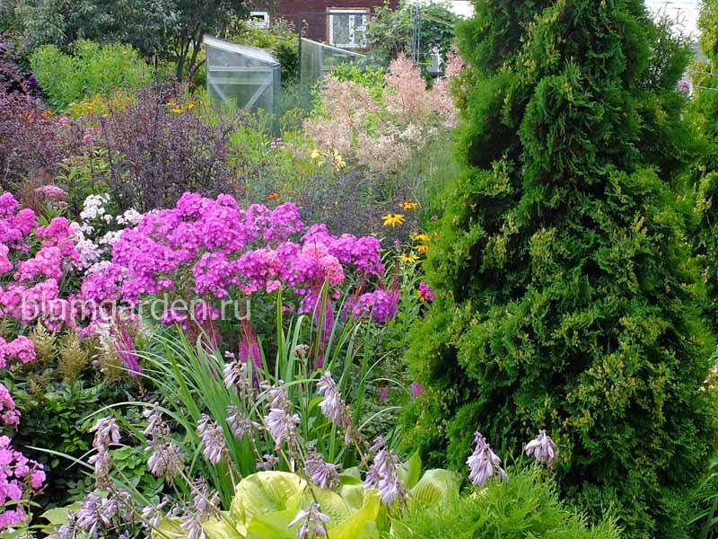 О нас - мой сад © Blumgarden.ru