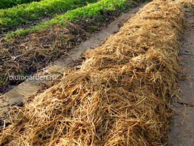 Мульчирование почвы © blumgarden.ru