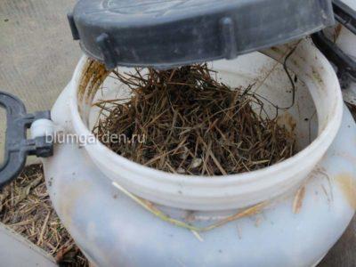 Бочка с куриным пометом для жидкого органического удобрения © blumgarden.ru