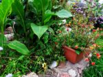 Сад на балконе © Blumgarden.ru