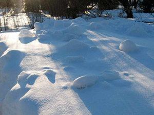 Снежный февраль © blumgarden.ru