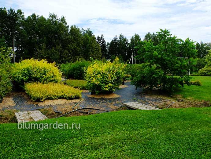 Питомник декоративных растений © Blumgarden.ru