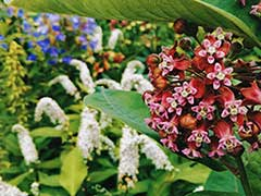 Сад Цветов