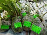 Саженцы многолетних растений упакованы для доставки по России © Blumgarden.ru