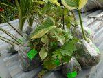Саженцы садовых растений на отправку © Blumgarden.ru