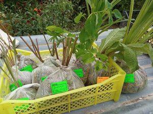 Заказ растений с доставкой в Татарстан © Blumgarden.ru