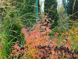 Ландшафтный сад в октябре © Blumgarden.ru
