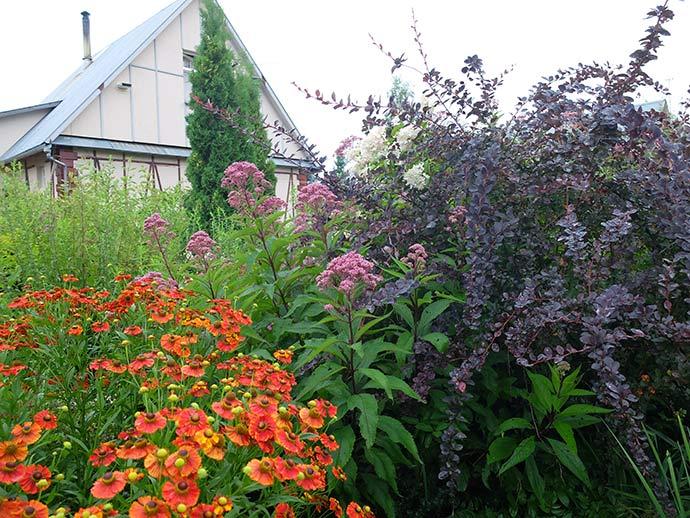 Дачный домик и палисадник с цветами и растениями © blumgarden.ru