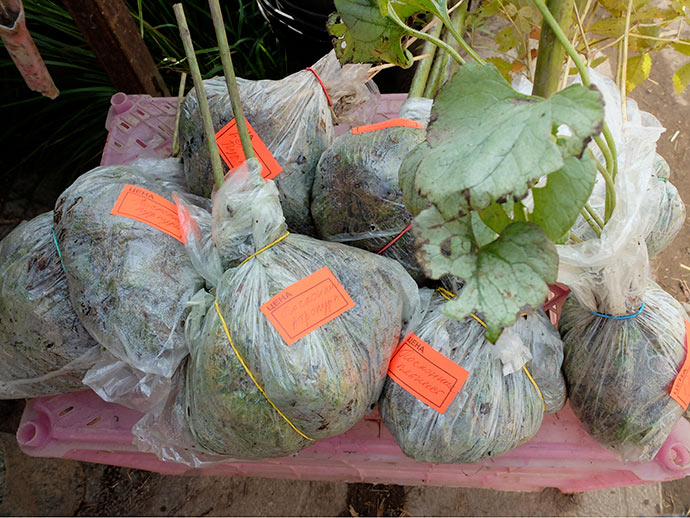 Упакованные саженцы растений © blumgarden.ru